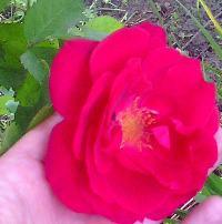 Róża's Avatar