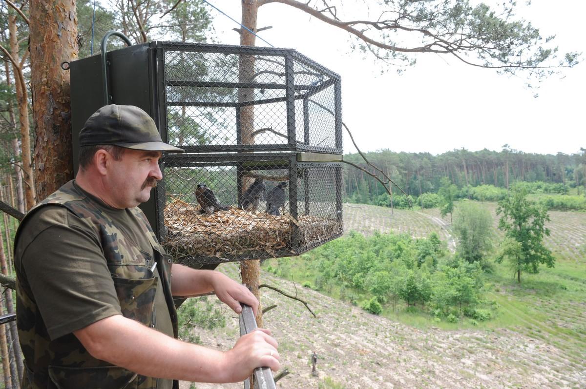 Reintrodukcje w Nadleśnictwie Włocławek odbywają się pod czujnym okiem leśniczego  Zbigniewa Piotrkowskiego - 2016