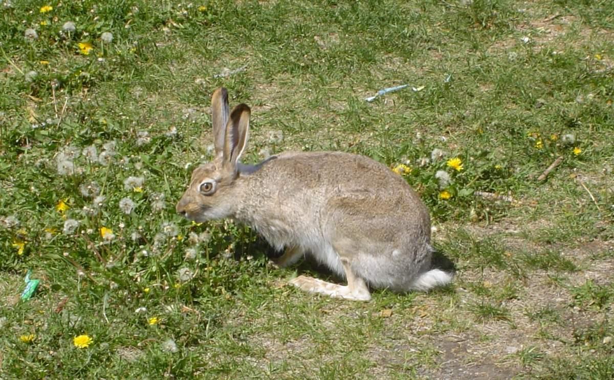 Rabbit-4.jpg