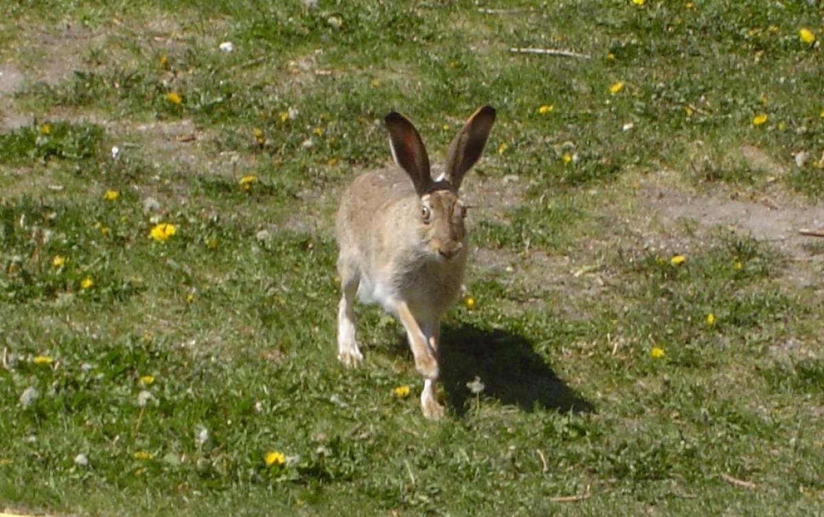 Rabbit-6.jpg
