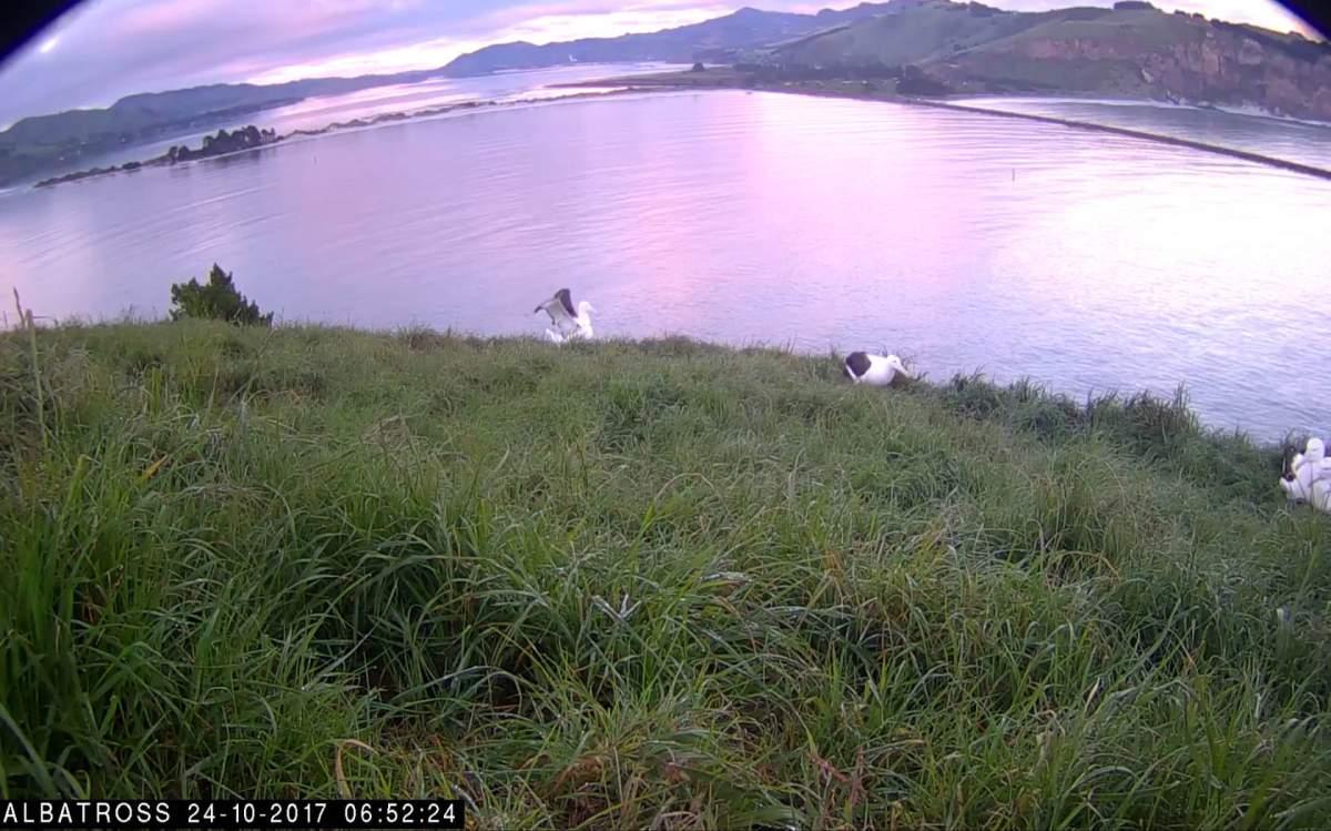 _Albatros-NZ-Oct-23-2017-02.jpg