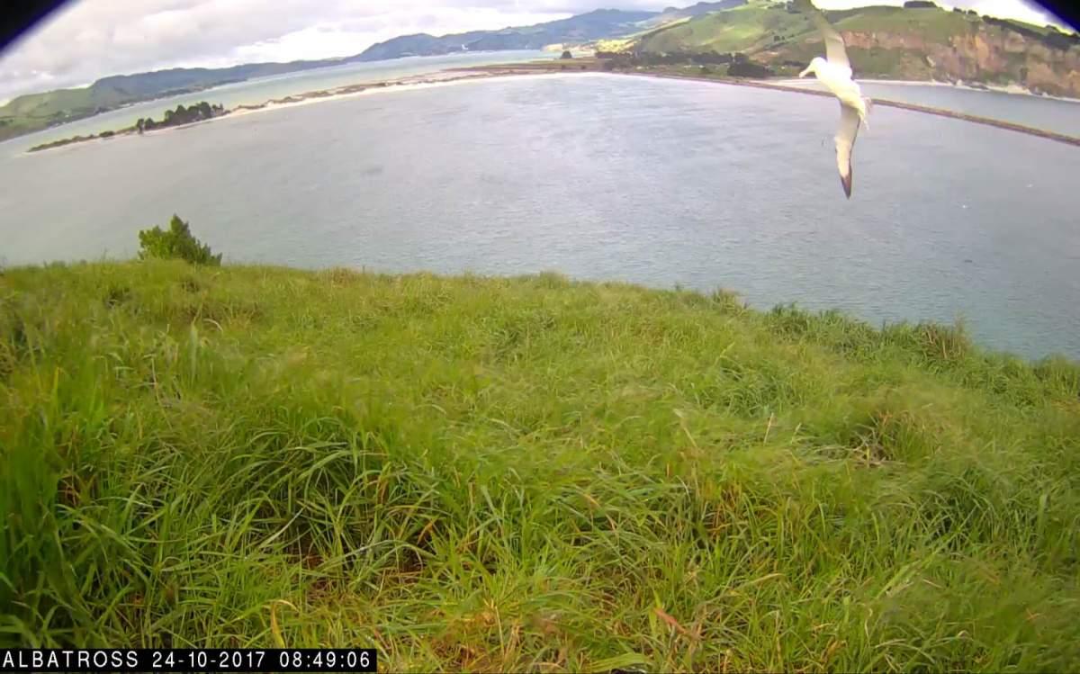_Albatros-NZ-Oct-23-2017-03.jpg