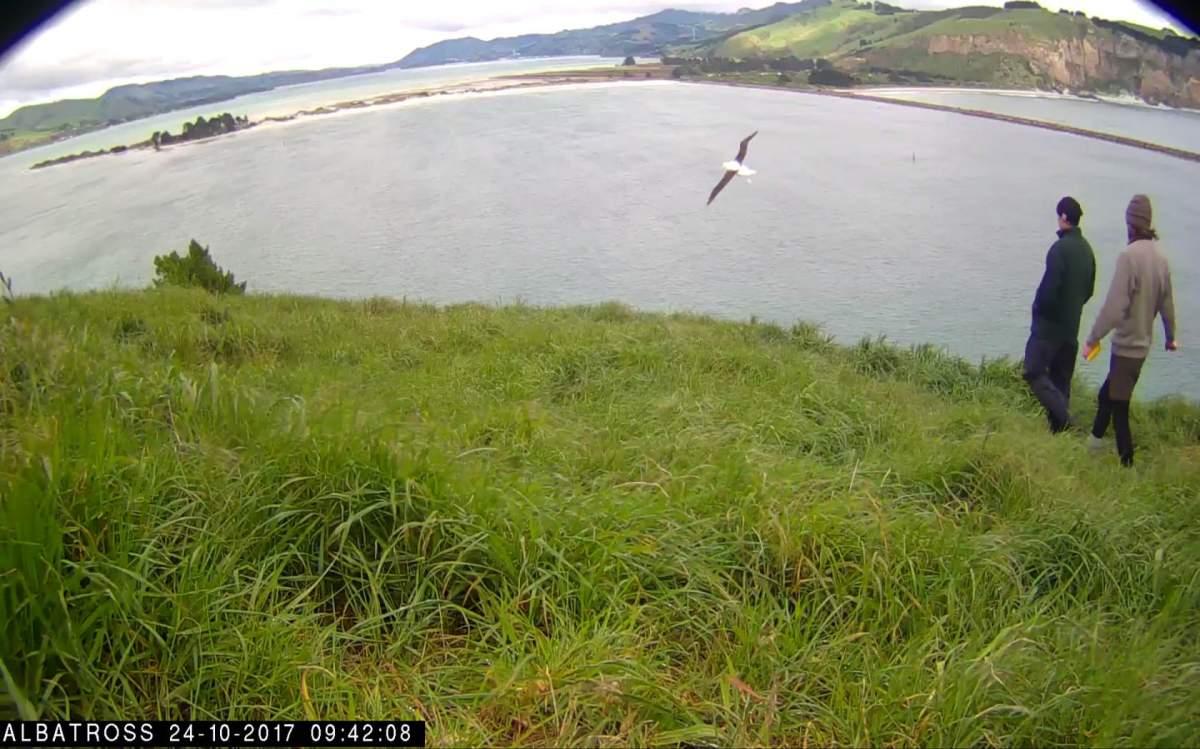 _Albatros-NZ-Oct-23-2017-06.jpg