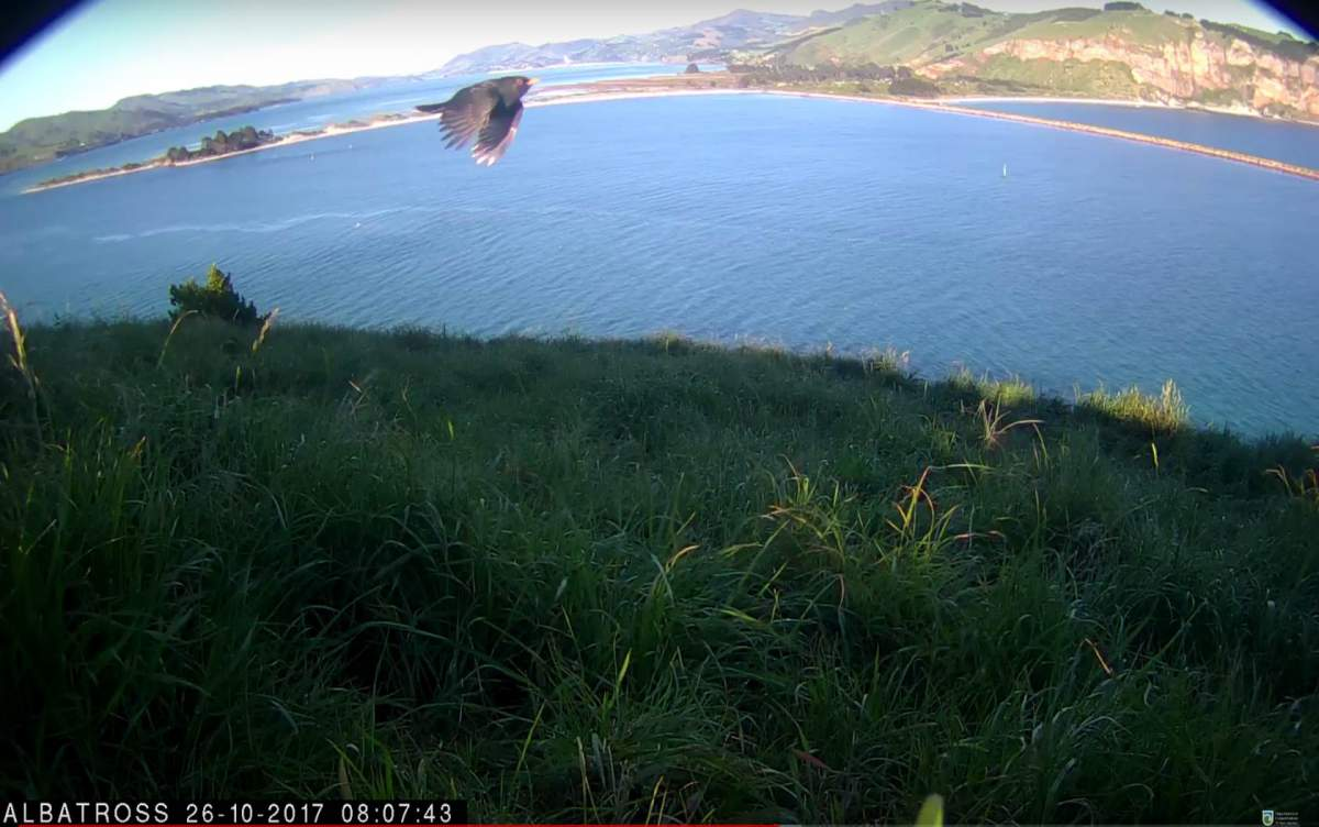 _Albatros-NZ-Oct-25-2017-02.jpg