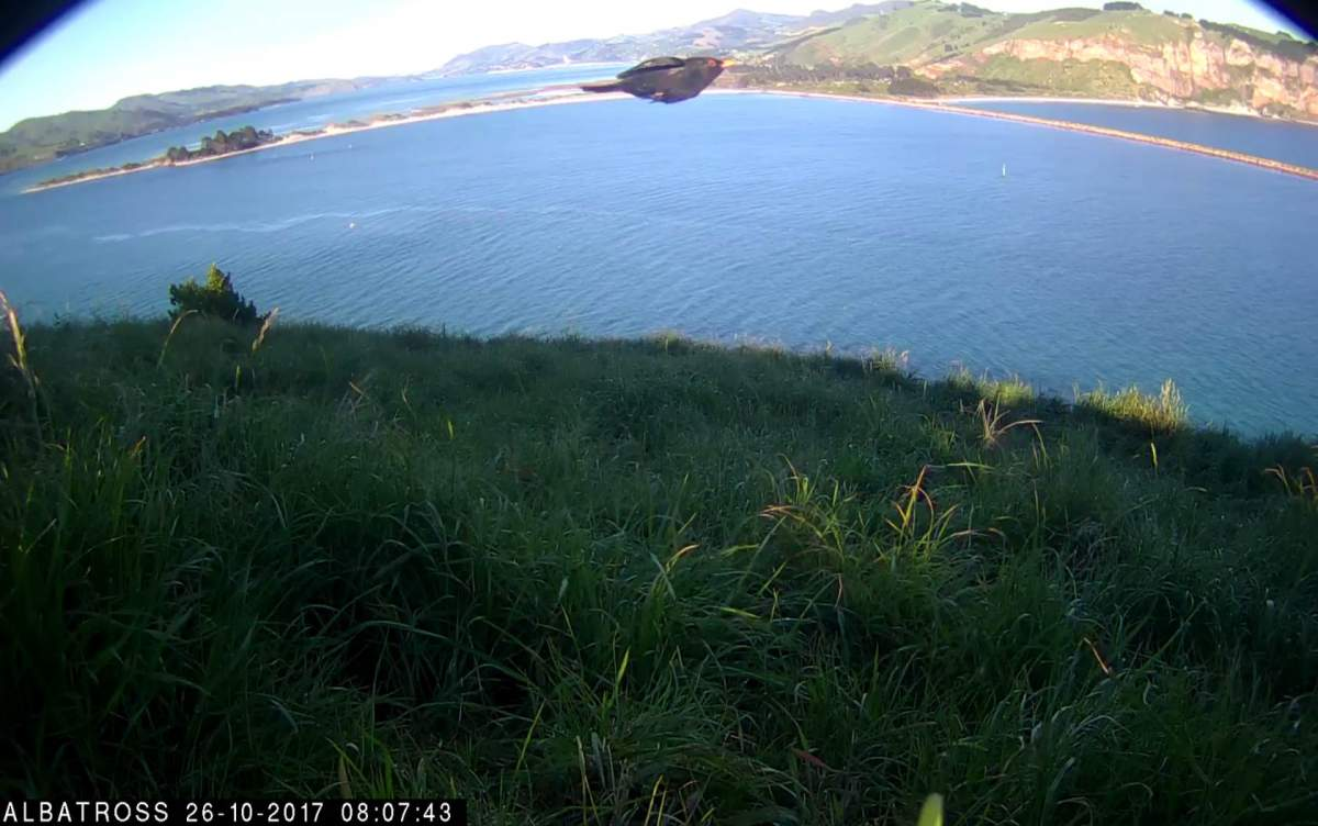 _Albatros-NZ-Oct-25-2017-03.jpg