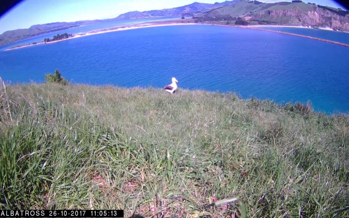 _Albatros-NZ-Oct-25-2017-04.jpg