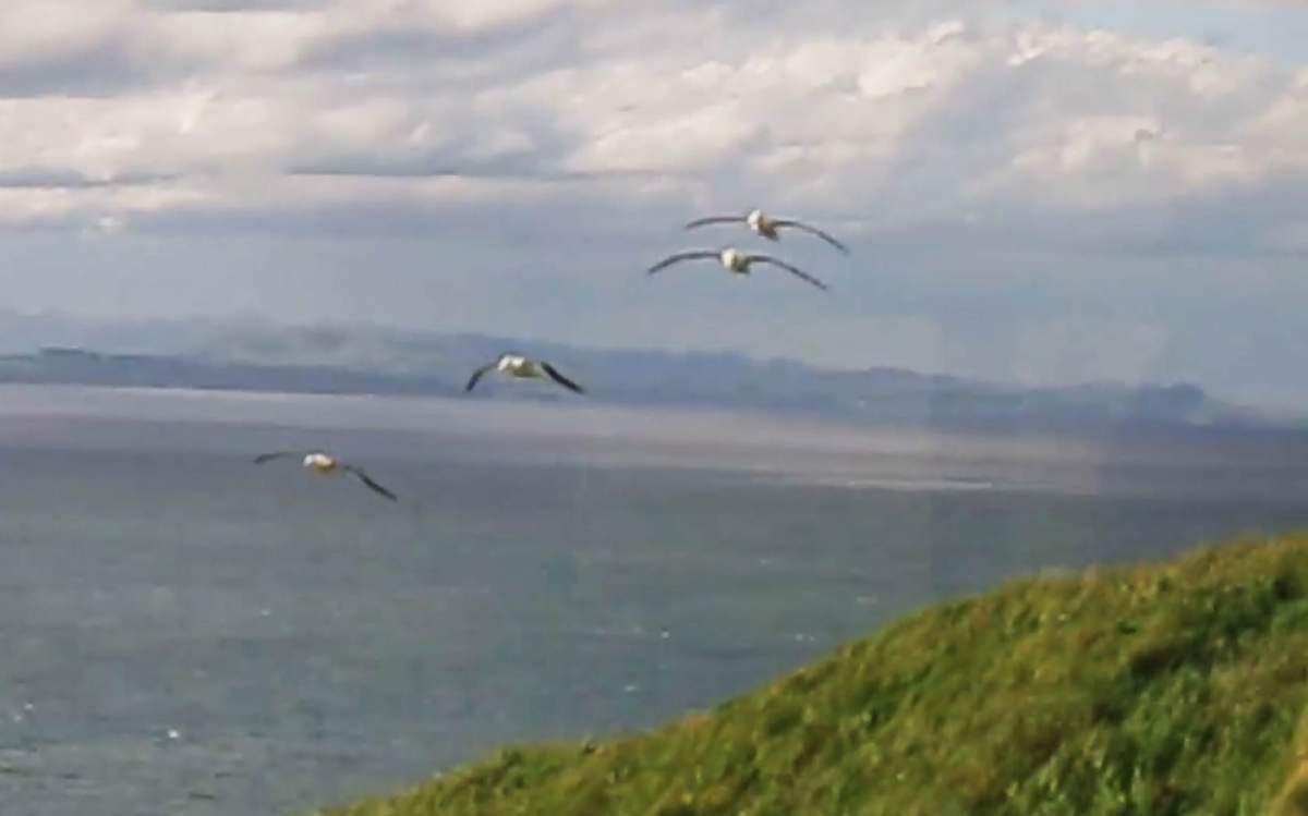 _Albatros-NZ-Oct-28-2017-01.jpg