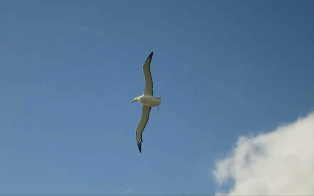_Albatros-NZ-Oct-29-2017-02.jpg