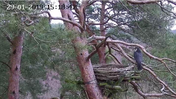 Webcam Trzebiez Bandicam2019-01-2915-20-13-219