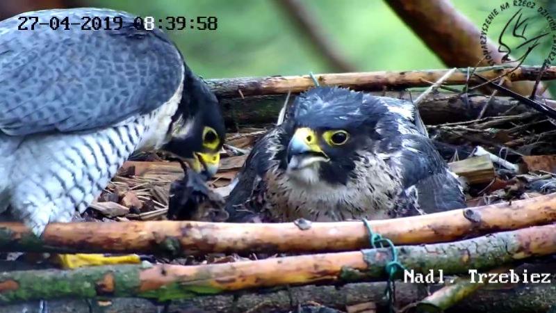 Webcam Trzebiez Sokwdrowny2019-04-2708-40-03-252